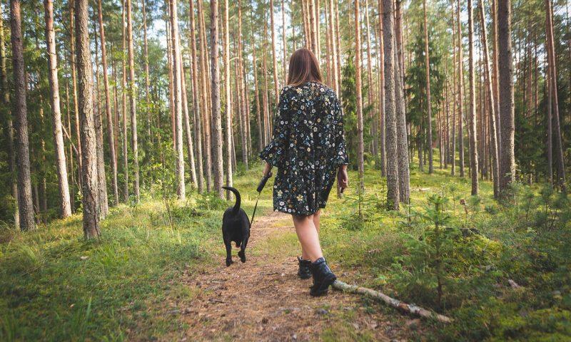 Comment éviter un accident quand on se balade en forêt avec un chien?