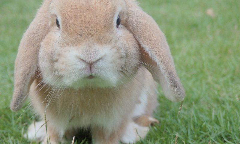 Un lapin: à l'extérieur ou à l'intérieur?
