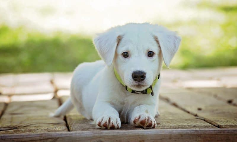 Comment nourrir ses chiens dans une démarche zéro déchet ?