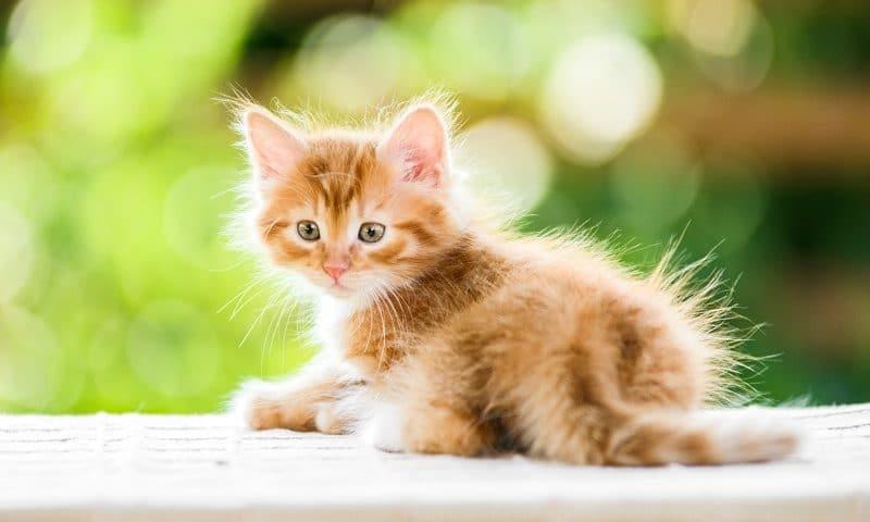 Quelles croquettes choisir pour votre chaton?