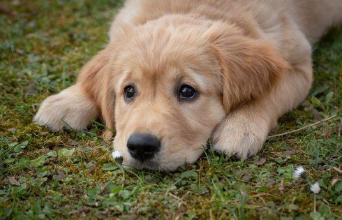 Pourquoi faire appel à un comportementaliste pour chien?