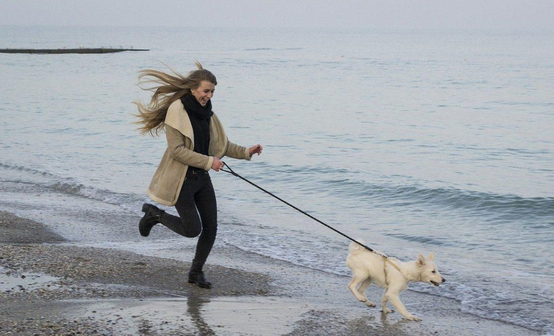 Partir à la plage avec son chien