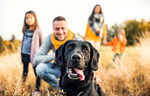 Éducation canine : Les 3 erreurs majeures à ne pas commettre pour réussir