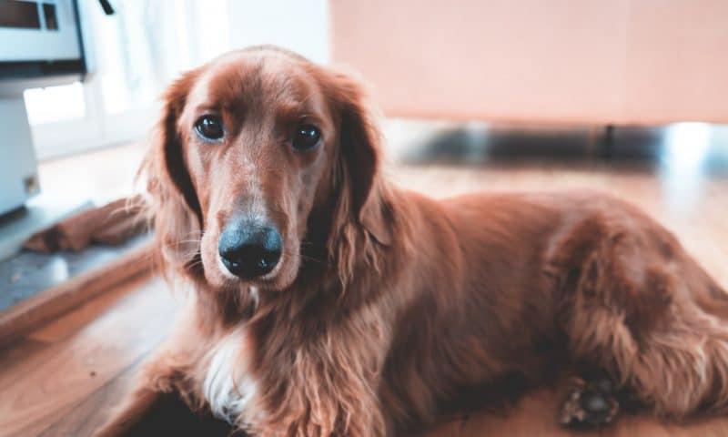 Troubles comportementaux du chien: quels sont les causes, symptômes et solutions?