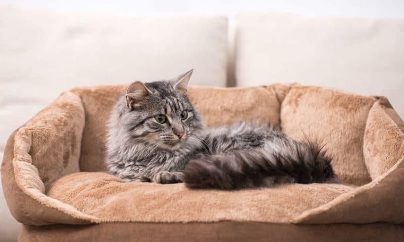Comment déménager avec un chat?