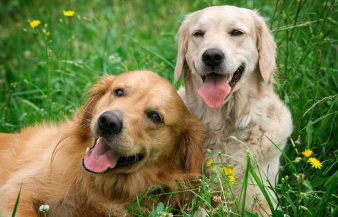 Mutuelle pour chien: qu'est-ce que c'est et comment trouver la meilleure?