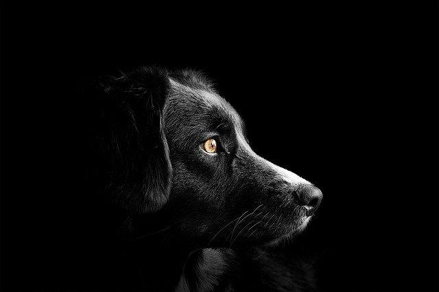 Les maladies de la peau les plus courantes chez un chien