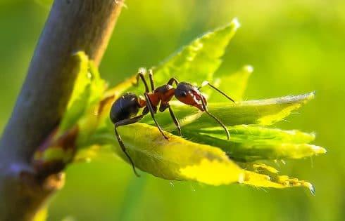 Tout ce que vous devez savoir pour débuter l'élevage de fourmis