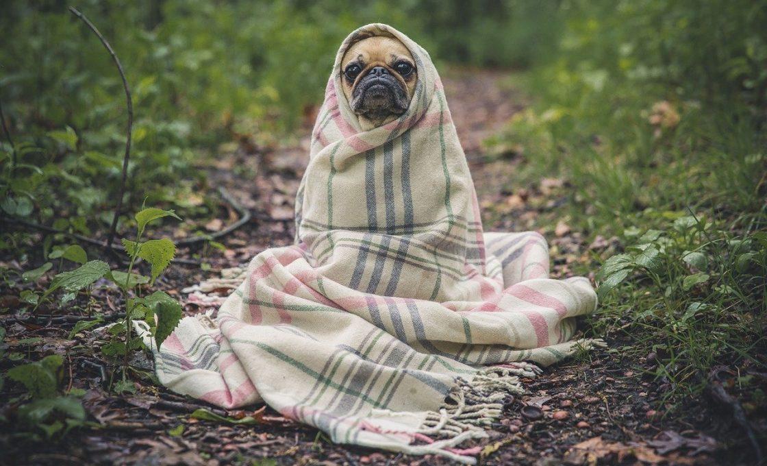 La gestion du stress chez le chien et la qualité du sommeil